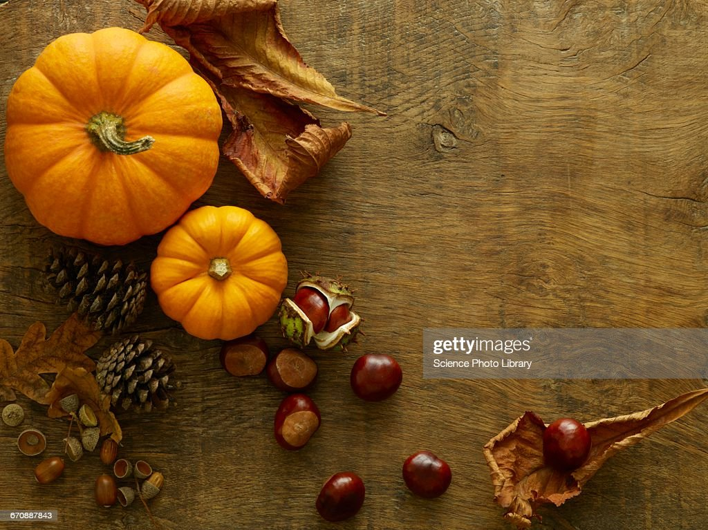 Autumn still life : Stock Photo