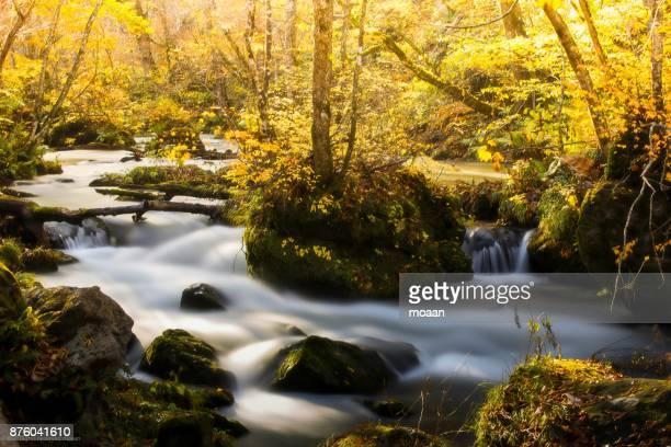 Autumn Stream in Oirase Valley