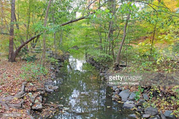 autumn stream - wellesley massachusetts stock pictures, royalty-free photos & images