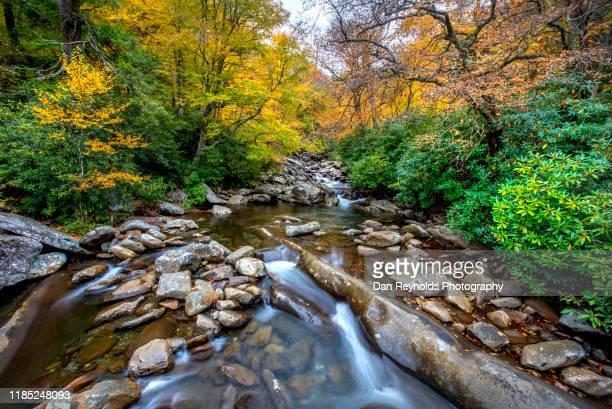 autumn stream - charlotte caroline du nord photos et images de collection