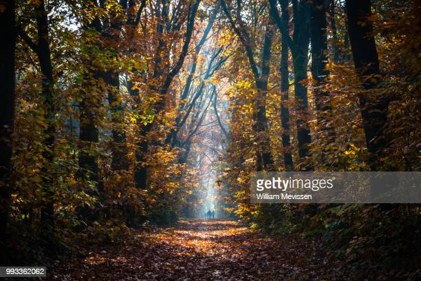 autumn stroll - william mevissen stock pictures, royalty-free photos & images