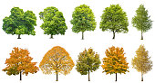 Autumn summer trees isolated white background