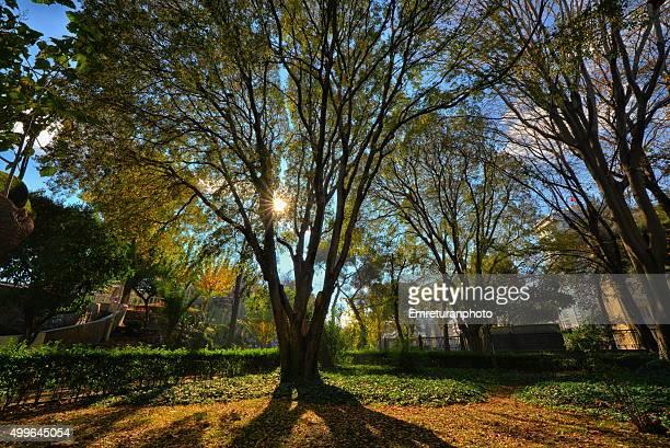 autumn sun behind a tree in cultural park - emreturanphoto bildbanksfoton och bilder