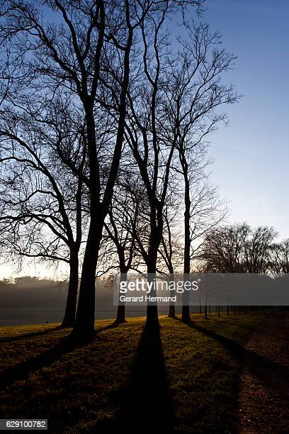autumn sun behind trees - yvelines stock pictures, royalty-free photos & images