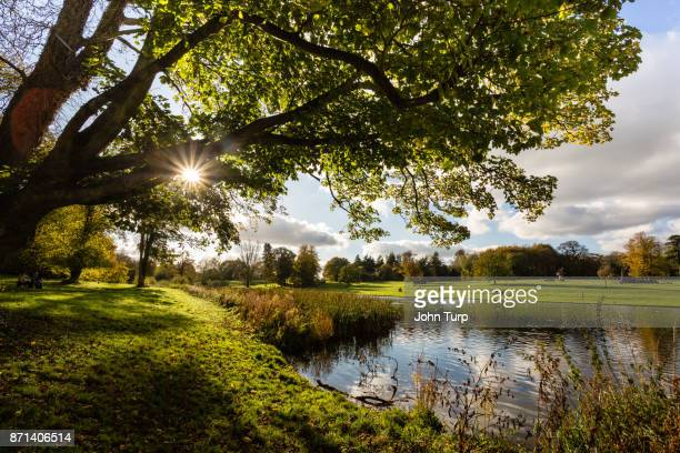 autumn sunburst at lydiard park, swindon - swindon stock pictures, royalty-free photos & images