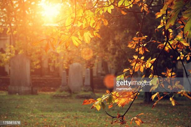 autumn sunlight in the cemetery - cemetery stock pictures, royalty-free photos & images