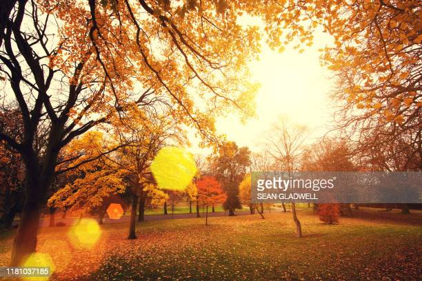 autumn sunlight - autumn stock pictures, royalty-free photos & images