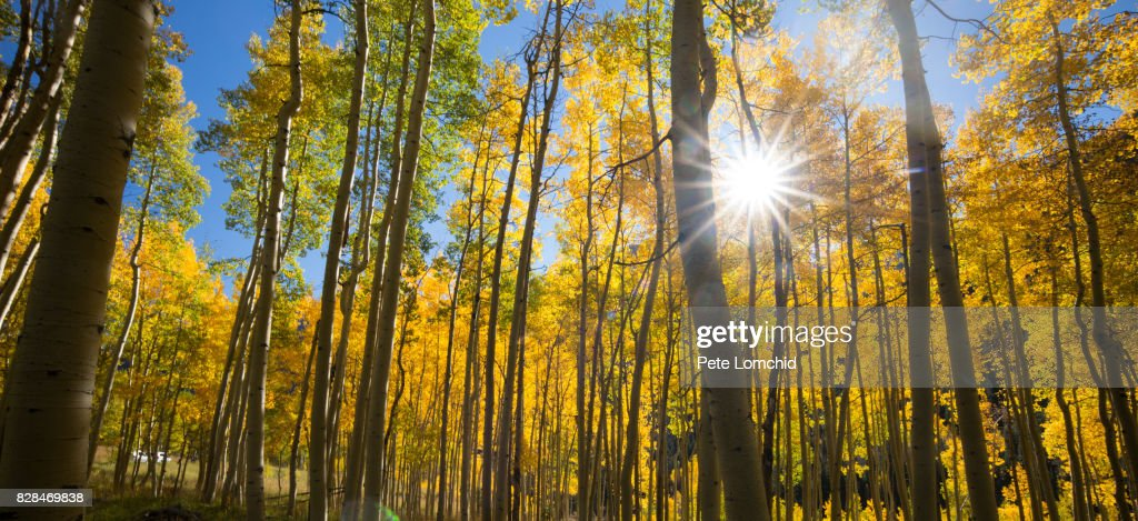 Sunrise Forest Autumn