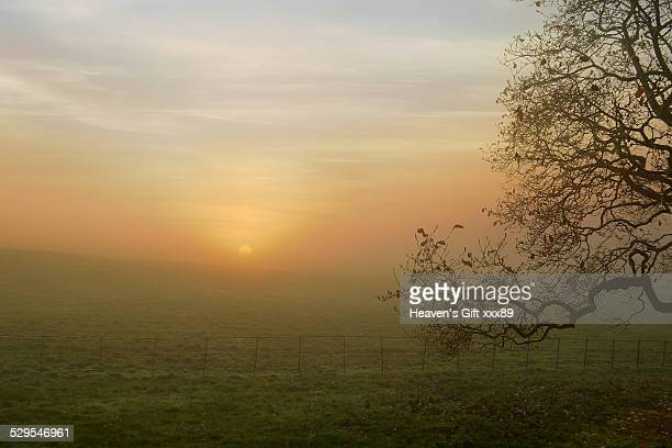 Autumn sunrise landscape Hampstead-heath uk