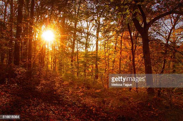 Autumn Sunset in the woods Landscape Photograph
