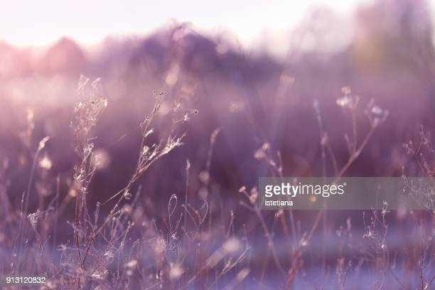 autumn sunset meadow background - ライラック ストックフォトと画像