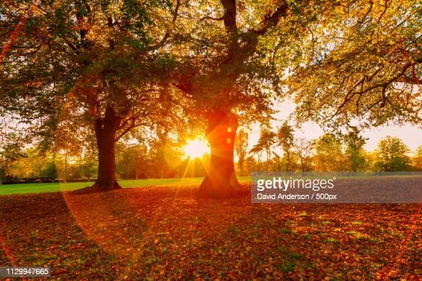 autumn sunshine - herbst stock-fotos und bilder