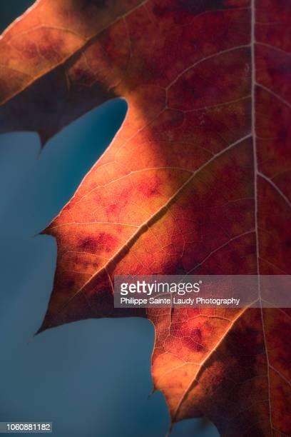 Autumn Sweetness