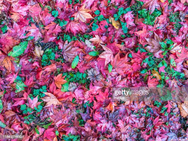 autumn tapestry - tetbury stock pictures, royalty-free photos & images