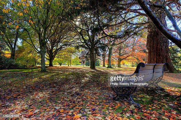 autumn time in pollard park, blenheim - blenheim new zealand stock pictures, royalty-free photos & images