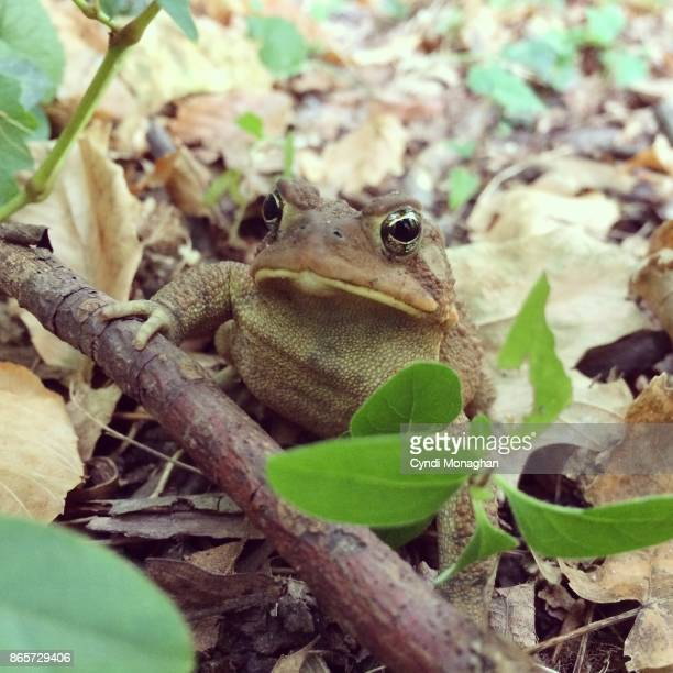 Autumn Toad