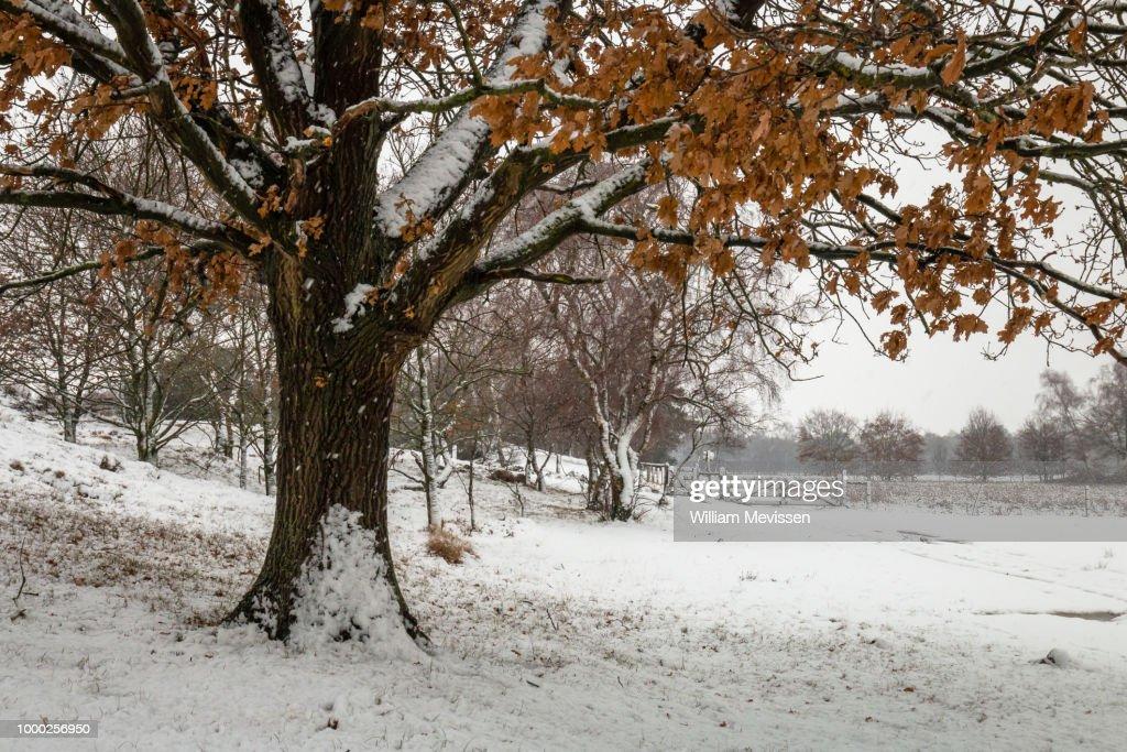 Autumn Tones In Winter : Stockfoto