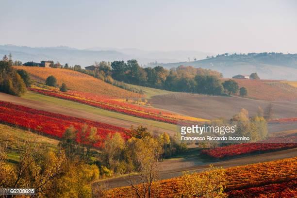 Autumn tones on vineyards and hills of Emilia Romagna. Castelvetro di Modena, Lambrusco Grasparossa wine region