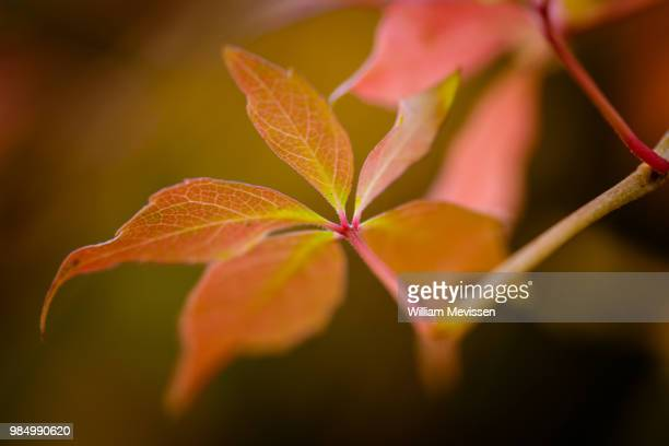 autumn tones - william mevissen stock-fotos und bilder