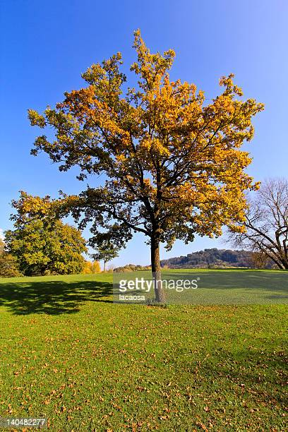 Autumn tree against blue sky