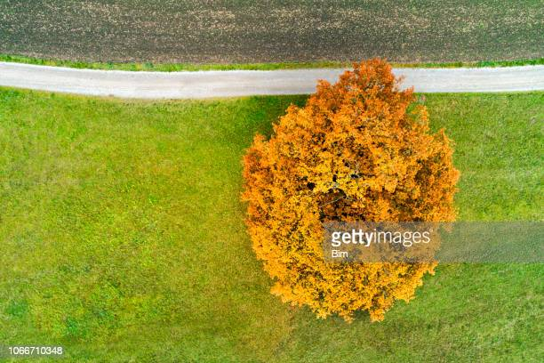 autumn tree and country road from above - treetop stock pictures, royalty-free photos & images