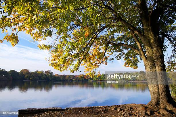 autumn tree と湖 - プロスペクト公園 ストックフォトと画像