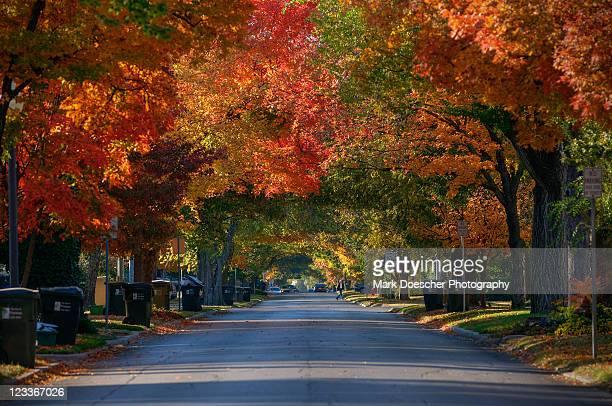 Autumn tree Avenue, Chautauqua