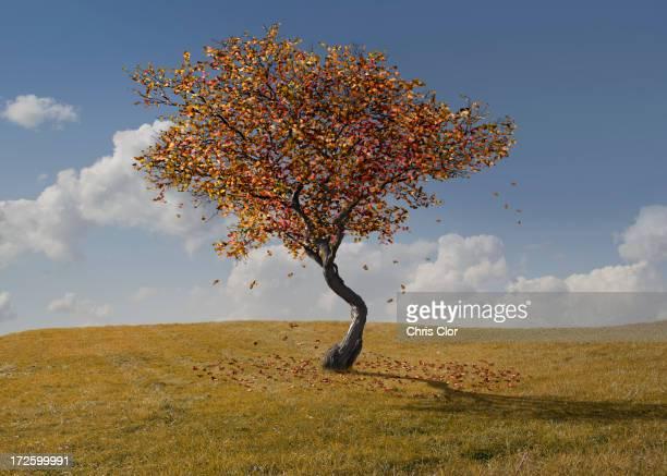 Autumn tree growing in rural landscape