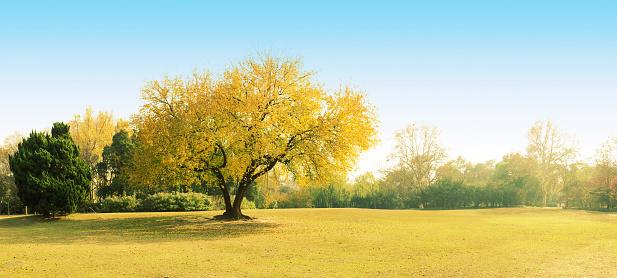 Autumn tree growing in rural landscape - gettyimageskorea