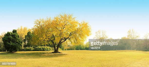 Autumn tree growing in rural landscape
