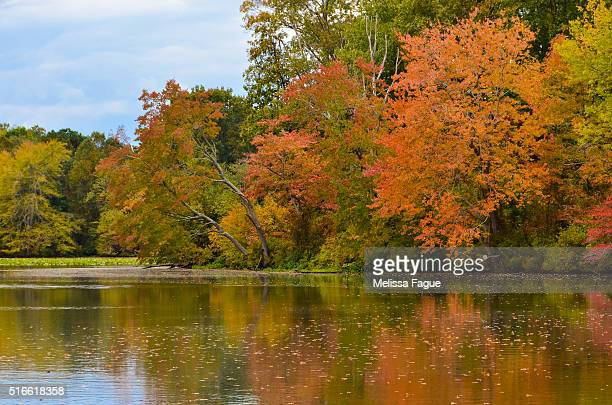 Autumn Tree Line Over Still Water of Pond