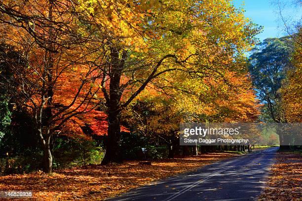 Autumn tree lined street