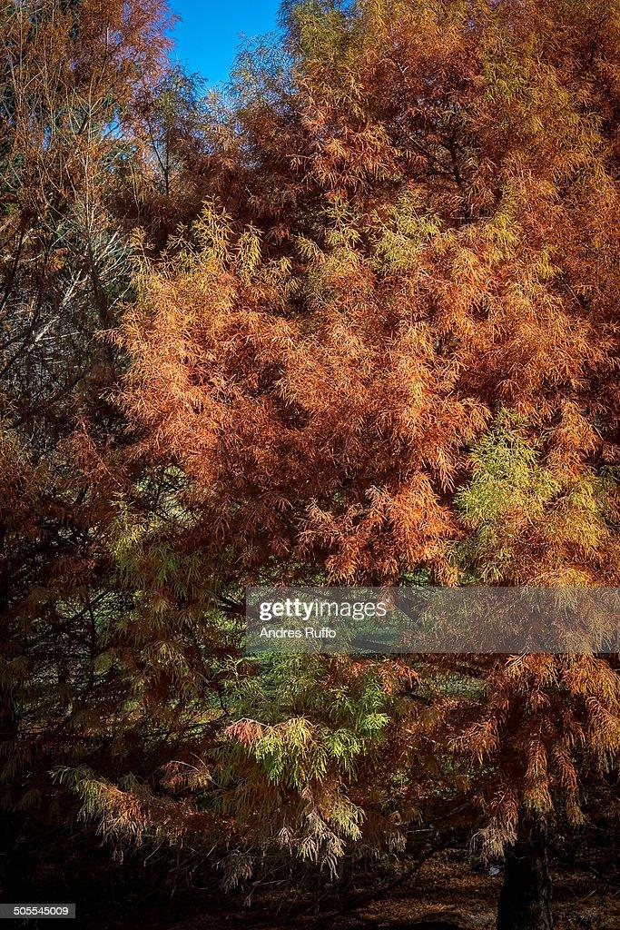 Autumn Tree : Stock Photo