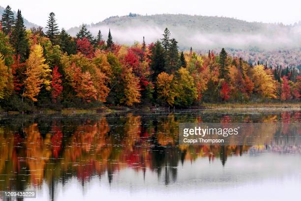 autumn tree reflections along the androscoggin river in dummer, new hampshire usa - new hampshire stock pictures, royalty-free photos & images