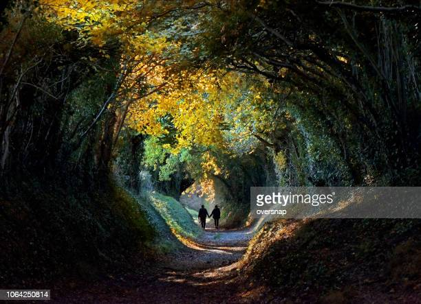 autumn tree tunnel - tunnel stock pictures, royalty-free photos & images