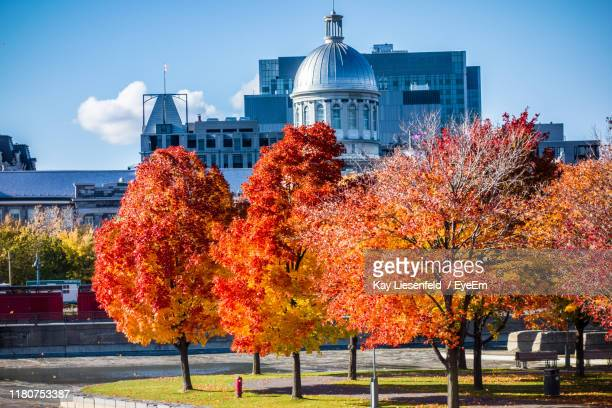 autumn trees and buildings in city - montréal stock pictures, royalty-free photos & images