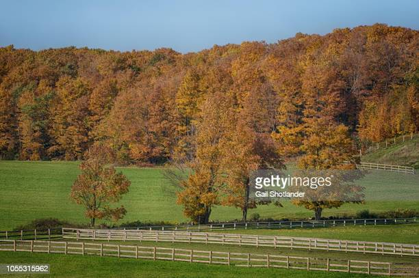 Autumn trees and fences