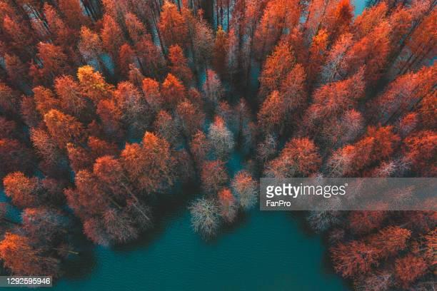 autumn trees and green lake - clima alpino foto e immagini stock