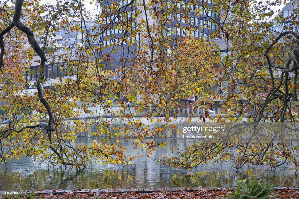 Autumn trees and Limmat river view in autumn ,Zurich. : Stock Photo