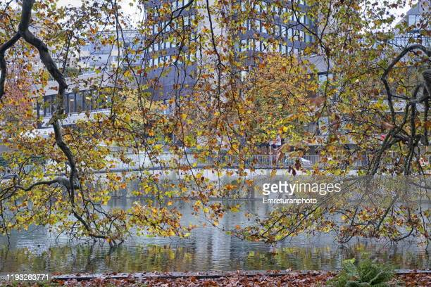 autumn trees and limmat river view in autumn ,zurich. - emreturanphoto stock pictures, royalty-free photos & images