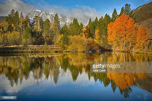 Autumn trees and mountains reflecting in pond