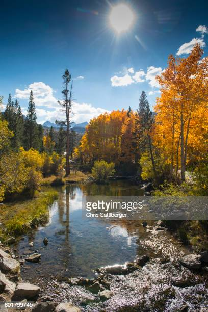 Autumn trees and remote lake