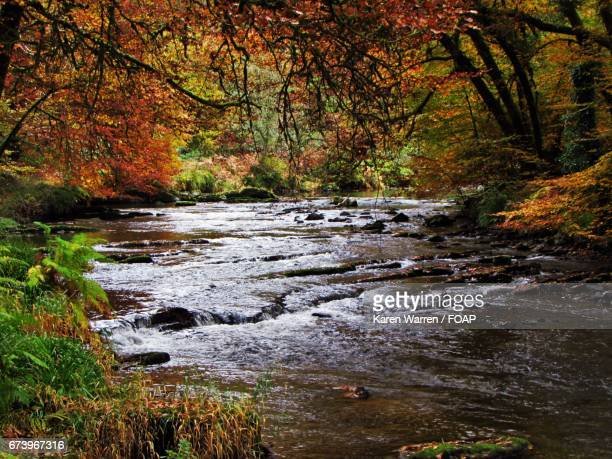 Autumn trees and river barle