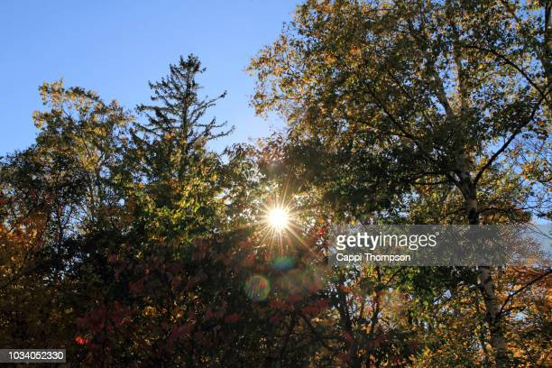 autumn trees and sun flare near newry (grafton notch), maine usa - cappi thompson stock pictures, royalty-free photos & images