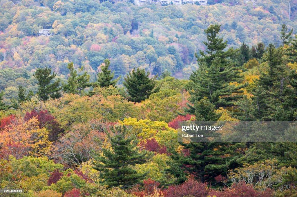 Autumn Trees at the Blue Ridge Mountains : Stock Photo