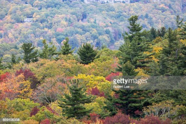 Autumn Trees at the Blue Ridge Mountains