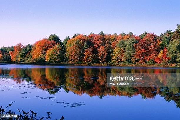 autumn trees at walden pond - walden pond stock pictures, royalty-free photos & images