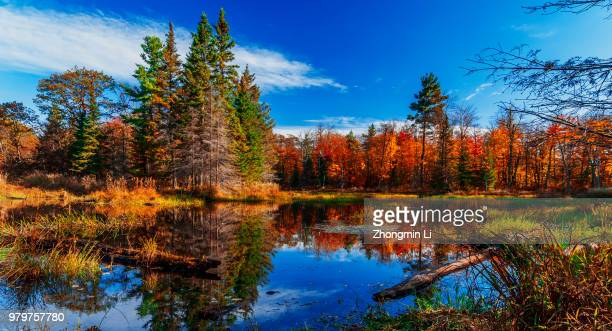 Autumn trees by lake in Gatineau Park, Quebec, Canada