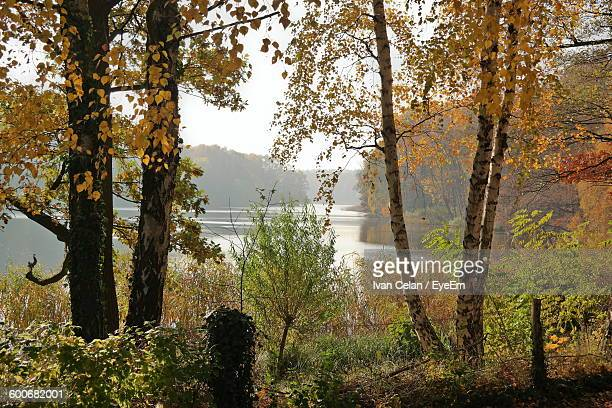Autumn Trees Growing By Lake In Forest