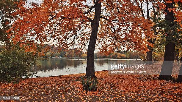 Autumn Trees Growing By Lake